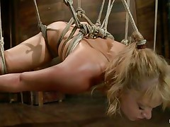Hogtied red dick tubes